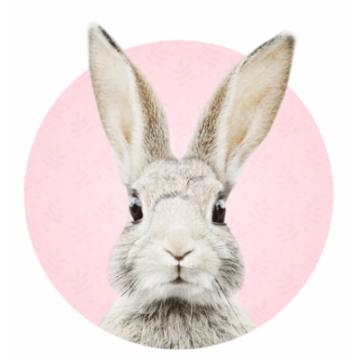 Naklejka królik Stefan -...